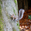 Squirrel clinging to a tree — Stock Photo