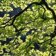 Stock Photo: Backlit leaves and branches