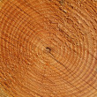 Tree annual rings close up — Stock Photo