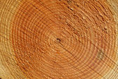 Träd årliga ringar på nära håll — Stockfoto