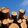 Stockpile of logging timber — Stock Photo