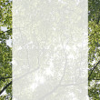 Stock Photo: Backlit tree border
