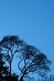 Trees silhouetted against a blue sky — Stock Photo