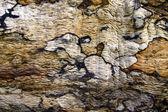 Tree bark pattern and texture — Stock Photo