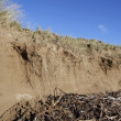 Sand dune erosion and driftwood — Stock Photo #38612001