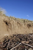Sand dune erosion and driftwood — Stock Photo