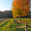 Trees in autumn — Stockfoto