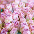 Royalty-Free Stock Photo: Pink roses for love