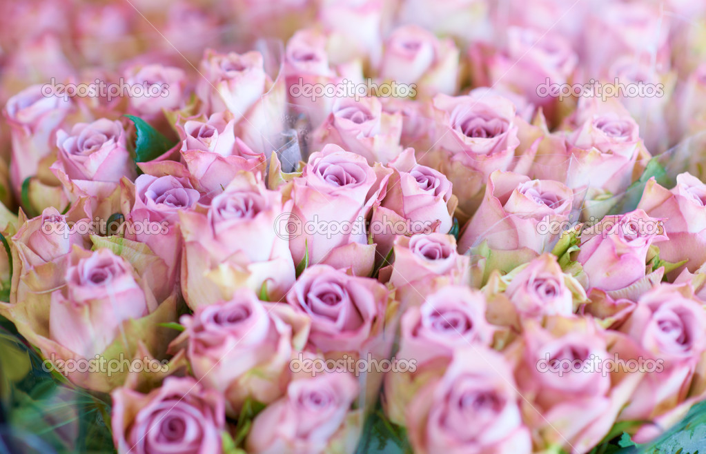 Closeup of a beautiful bunch of blushing pink roses — Stock Photo #13602314