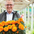 Senior man in a plant nursery proudly displaying a tray of fresh marigolds - Stock Photo