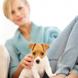 Royalty-Free Stock Photo: A puppy is a loyal companion