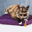 She's a pampered pet - Stockfoto