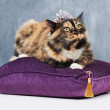 I'm the queen! - Foto de Stock