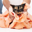 Royalty-Free Stock Photo: Cats weren\'t meant to be towel-dried!