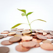Use your money to help nature grow - Stock Photo