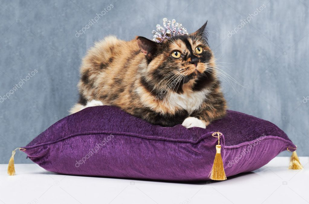 Pampered cat sitting on a velvet cushion and wearing a tiny tiara  Stock Photo #17130729