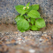 Green in the urban drab - Stock Photo