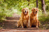Portrait of a two dogs — Foto de Stock