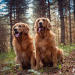 Portrait of a two  dogs — Stock Photo