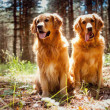 Portrait of a two  dogs — Stock fotografie