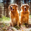 Portrait of a two  dogs — Stockfoto