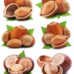 Hazelnuts — Stock Photo #19470693