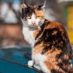 Cat sitting — Stock Photo #23380282