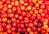 Cherry plum — Stock Photo