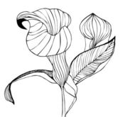 Calla flower isolated on white background - vector illustration — Stock Vector