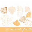 Vector set of seashells — Stock Vector
