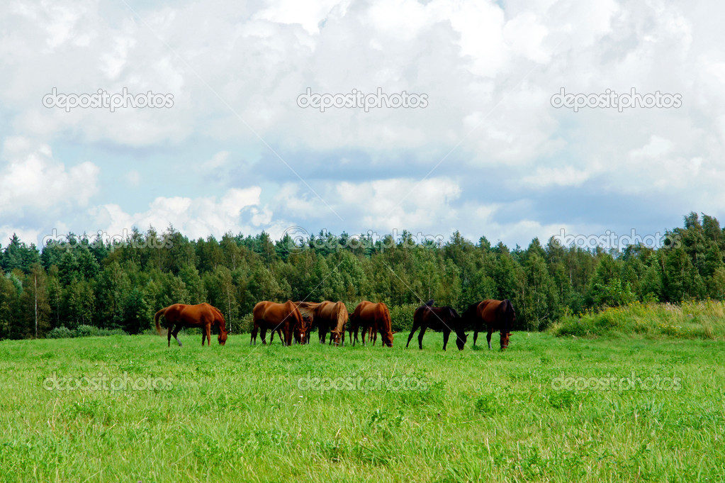 Several horses feeding at the runch on bright summer day — Stock Photo #12084975