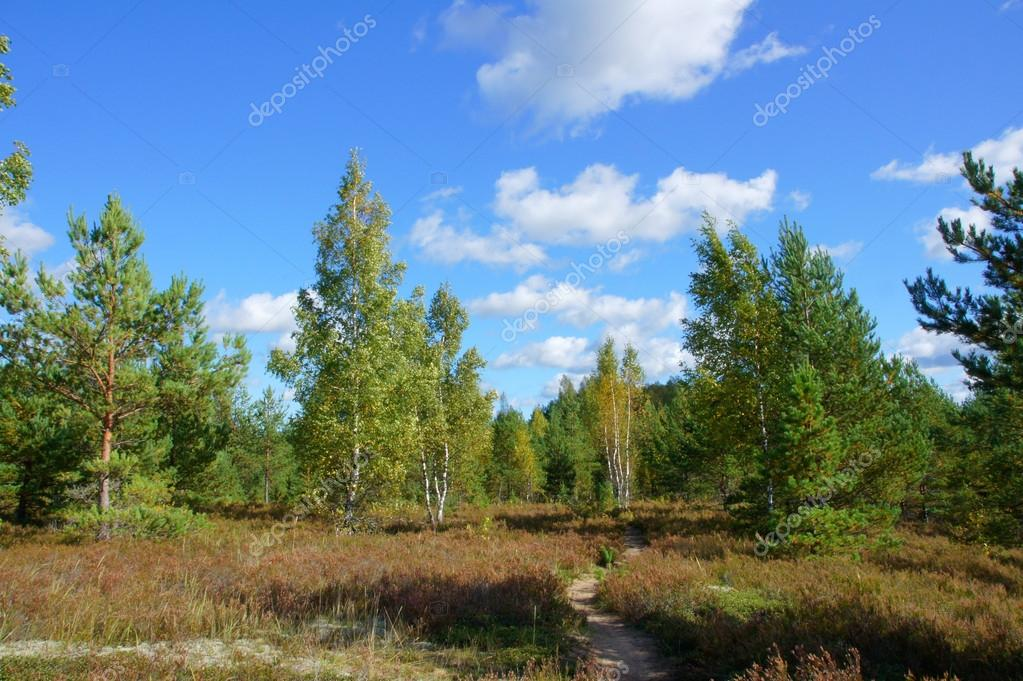Landscape of young green forest with bright blue sky — Stock Photo #13119087