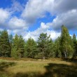 Stock Photo: Forest and sky