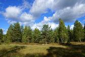 Лес и небо — Стоковое фото