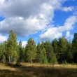 Forest and sky — Stock Photo #13254354