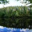 Reflection of the green forest — Stock Photo