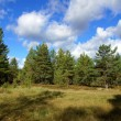 Forest and sky — Stock Photo #13302510