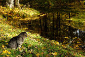 Cat and pond — Stock Photo