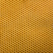 Honeycomb with bee - Stock Photo