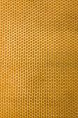 Honeycomb with bee — Stock Photo