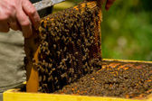 Beekeeper and honeycomb with bees and honey — Stock Photo