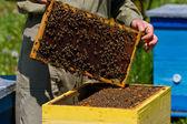 Imker und Wabe mit Bienen — Stockfoto