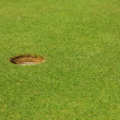 Stock Photo: Golf hole in a course. Golf green.