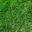 Ecological green grass texture — Photo