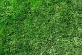 Ecological green grass texture — Stock Photo