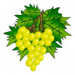 Bunch of Grape with vine leafs isolated on white — Stock Photo