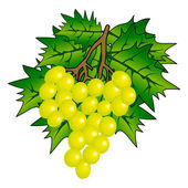 Racimo de uva con vid hojas aisladas en blanco — Foto de Stock