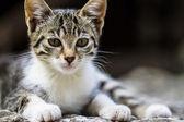 Lovely little cats — Stock Photo