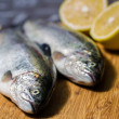 Stock Photo: Trout fish