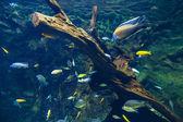 Fishes underwater — Stock Photo